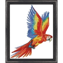 Colourful Macaw