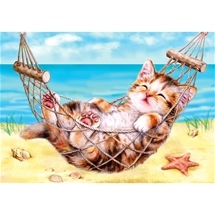 Kitten On Holiday