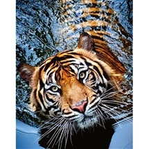 Tigress Diamond Embroidery