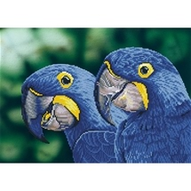 Blue Hyacinth Macaws