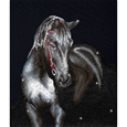 Midnight Stallion_50339_0