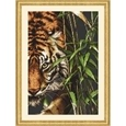 The Tiger_63026_0