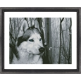 Siberian Husky in the Woods_F2612_0